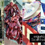 Experience Scottsdale, Arizona #ScottsdaleAZ