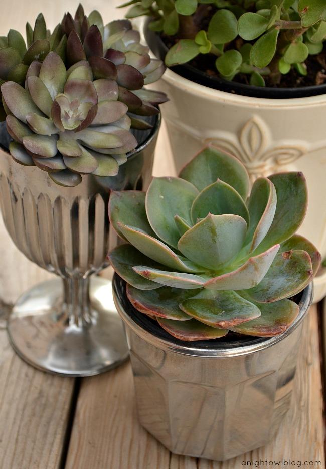 Diy mercury glass succulent planters a night owl blog Planters for succulents