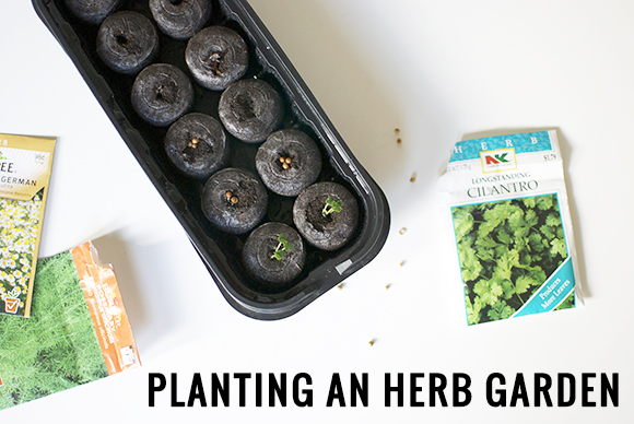 The Neighborhood: Planting an Herb Garden