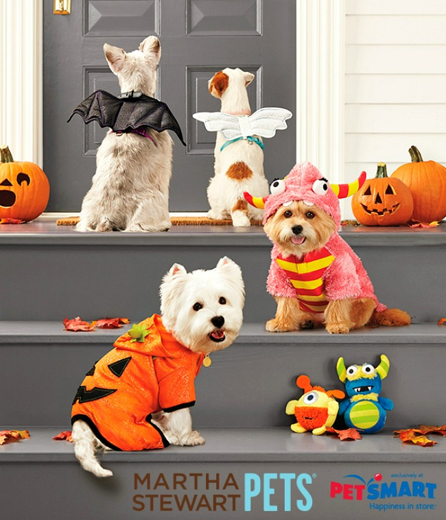 Martha Stewart Pets Halloween Costume Contest