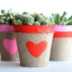 Succulent Valentine