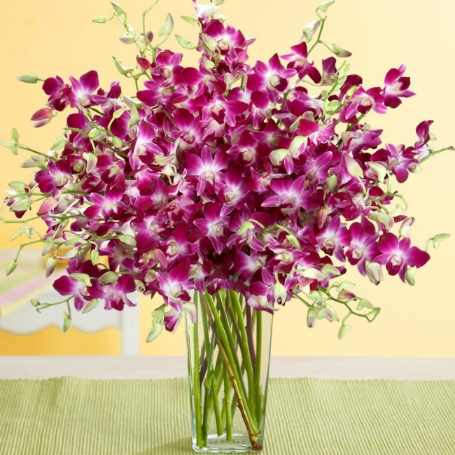 Purple Dendrobium Orchids - perfect gift for Mother's Day from ProFlowers!