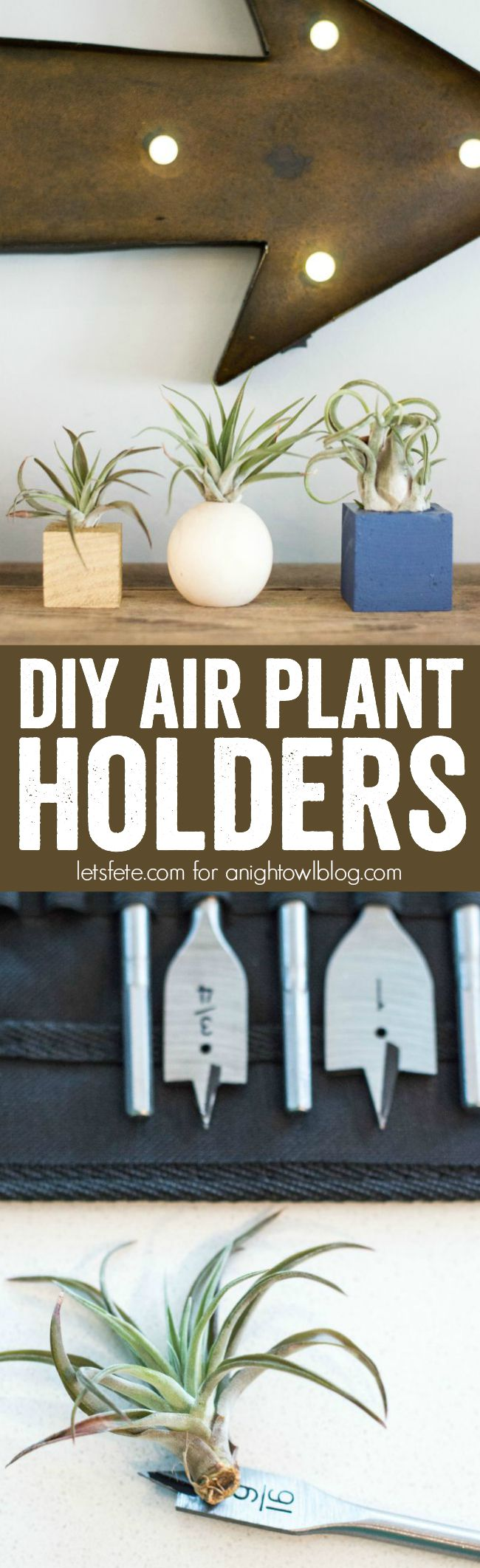 DIY Air Plant Holders - easy and fun holders you can make at home with just a few supplies and endless imagination!
